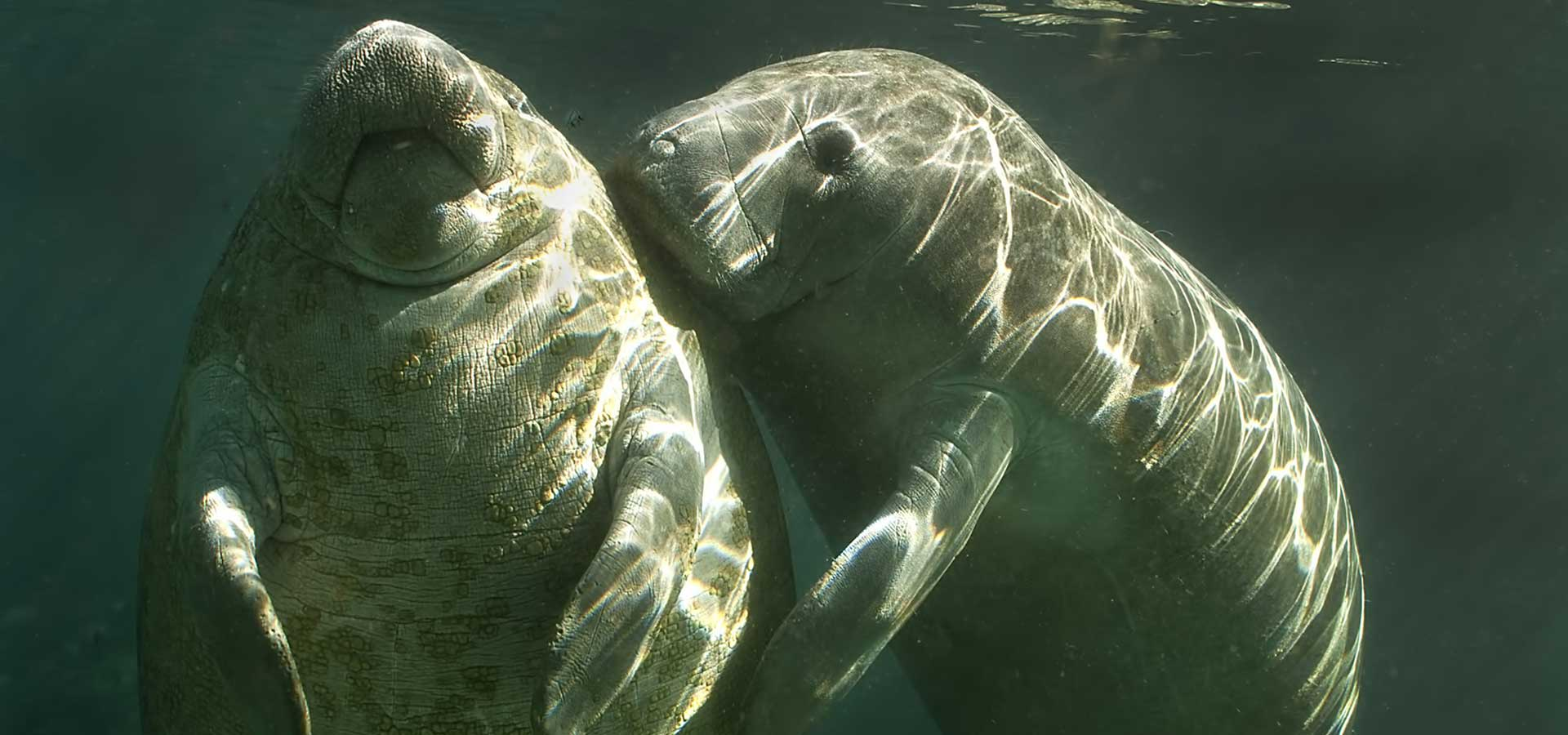 Now Booking Manatee Tours